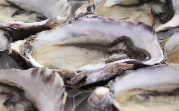 Standard size Pacific Oyster