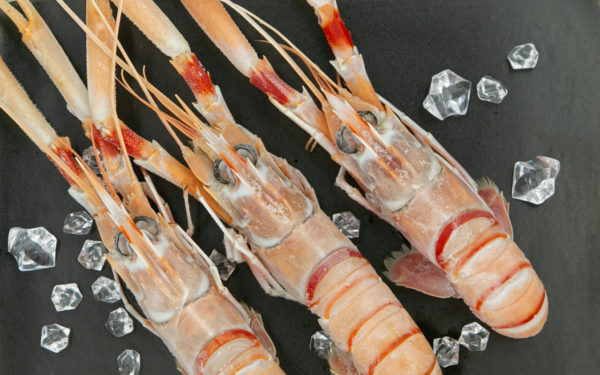 Size 1 Scampi